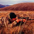 Hunting Scenes